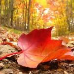 Моя осень…