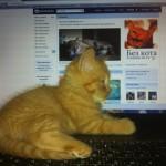 Котики тоже следят за новостями……