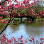 Весна — пора любви.