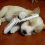 » — Привет, нет, не сплю..» :DD…