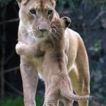 …чтобы понять, есть ли у животных душа, нужно самому иметь душу………