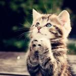 солнышко, пожалуйста, радуй нас почаще!…