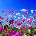 Весенний шепот,птицы в небе