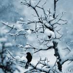 У зимней тьмы печалей полон рот,