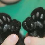 Вездесущие коты в музее Хэмингуэя
