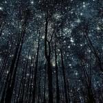 Я ночь люблю за одиночество,
