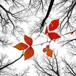 Что ни говори, а осень — лучшее время для того, чтобы стоять у цели своих желаний.