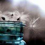 Стекают ангельские гривы