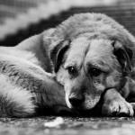 Глаза собаки.., что лишилась дома..!