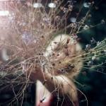 Фруктовый сад моих ошибок