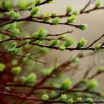 Под медный звон листвы берёз