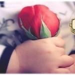 Выбирал мальчишка розу осторожно,