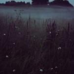 Здесь даже осенью зелена трава