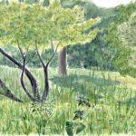 Басня Крылова про листы и корни